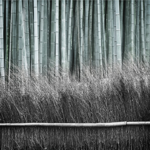 Bamboo and Fence