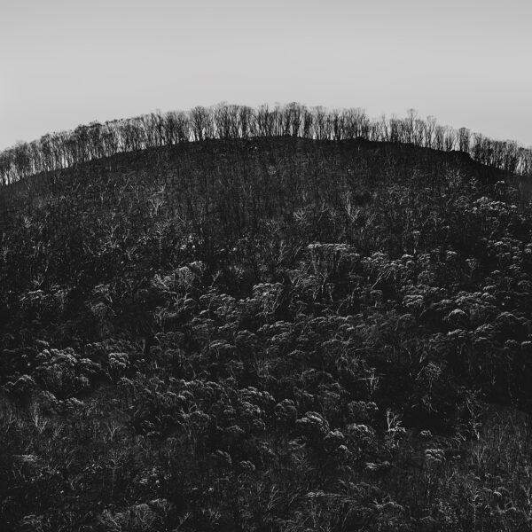 Burnt Landscape 6